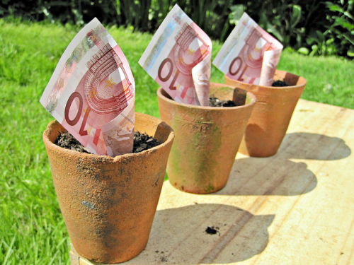 Euros in a plant pot