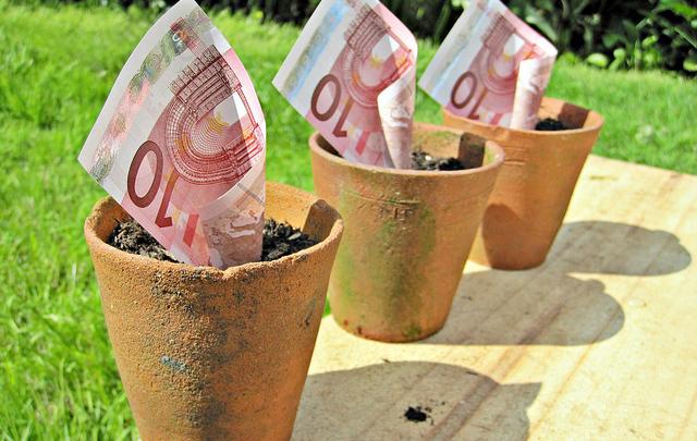 Euros in a plant pot